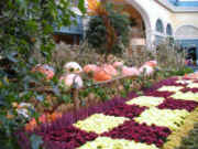 Bellagio Gardens Fall Display